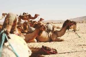 hair routine morocco argan oil